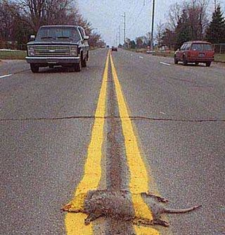 Software is Roadkill