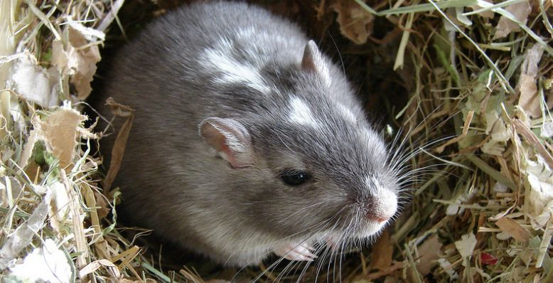 rat hole