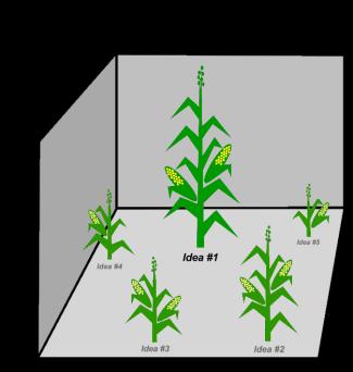 Solution landscape - cornstalks