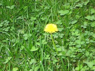 Defrag in the weeds