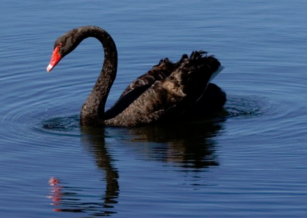 Agility, black swans and the Cloud